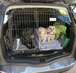 Ford Mondeo Estate, Dog Cage, Pet Travel Crate