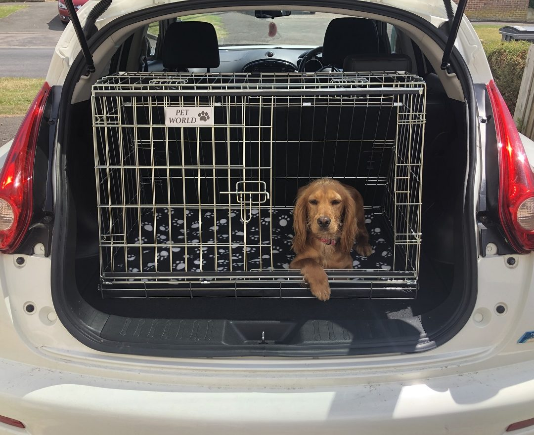 Nissan Juke, Car Dog Cage, Travel Crate for Pets