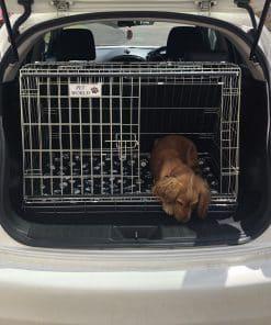 Nissan Juke Dog Cage