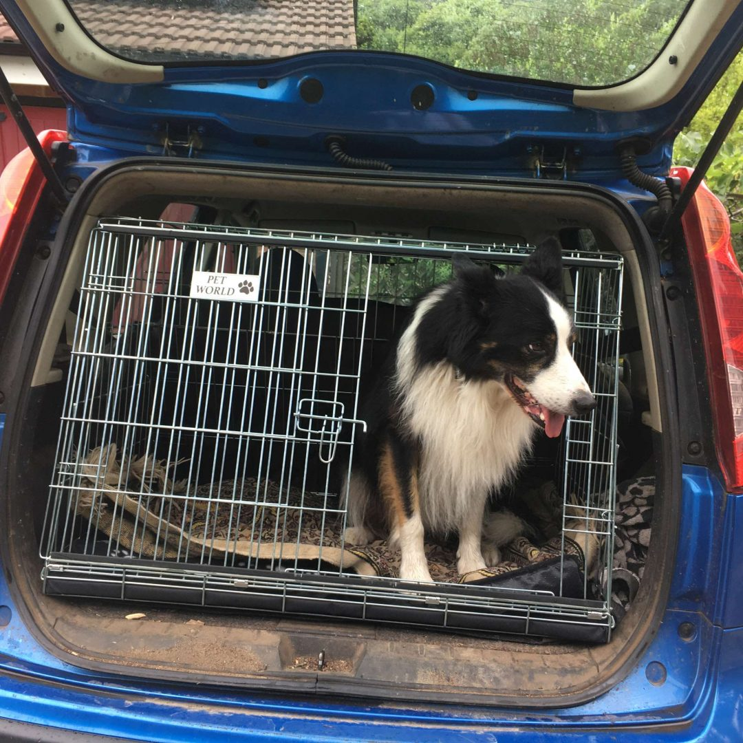 nissan note, car dog cage, pet travel crate